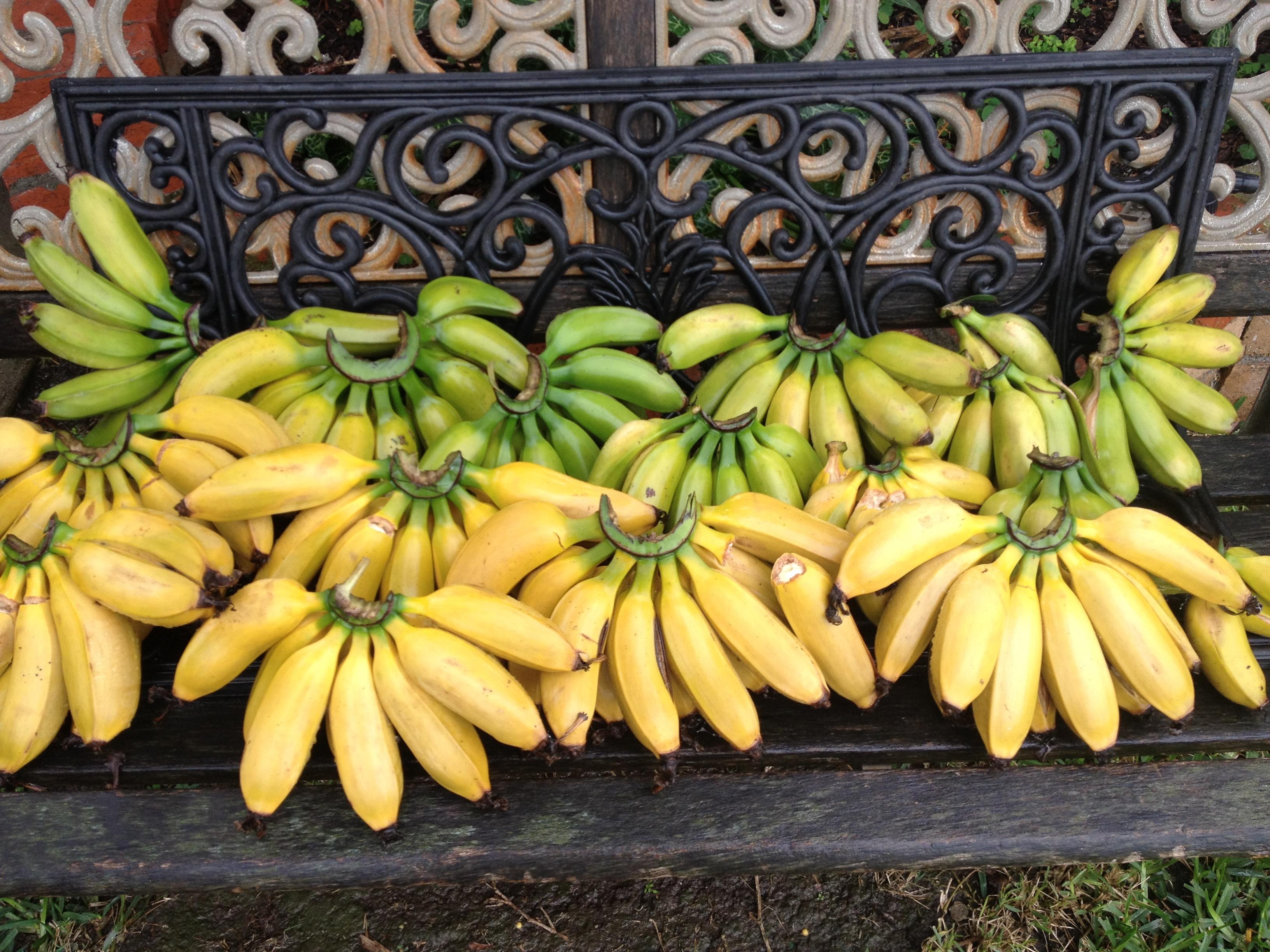 Hawaiian Apple Bananas
